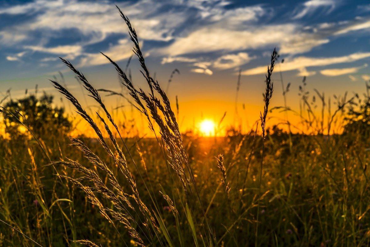 agricoltura vincitori bando agro social