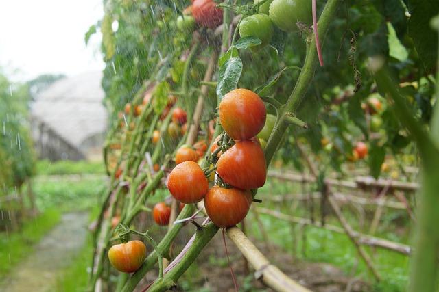 Puglia maltempo agricoltura