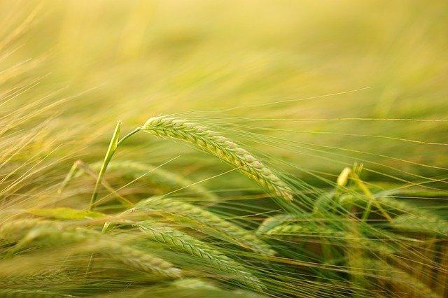 agricoltura coldiretti aziende crisi